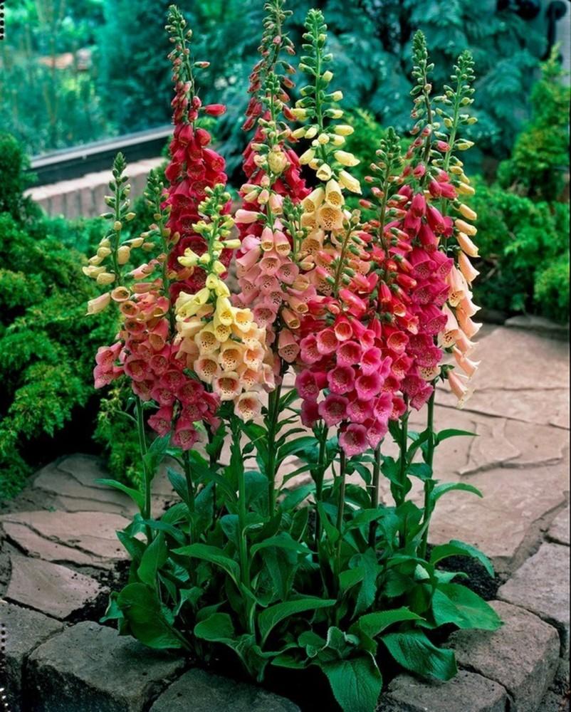 частном секторе цветы высокие для сада и огорода фото с названиями макияж